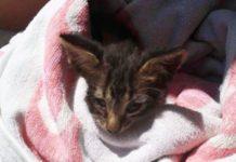 Charlie, il gattino appena salvato