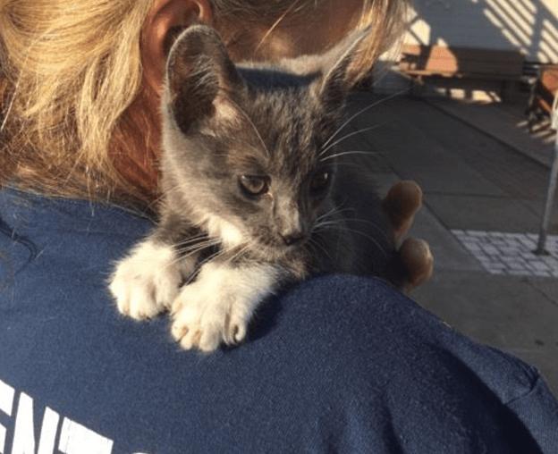 I Pompieri di Sacramento salvano otto gattini