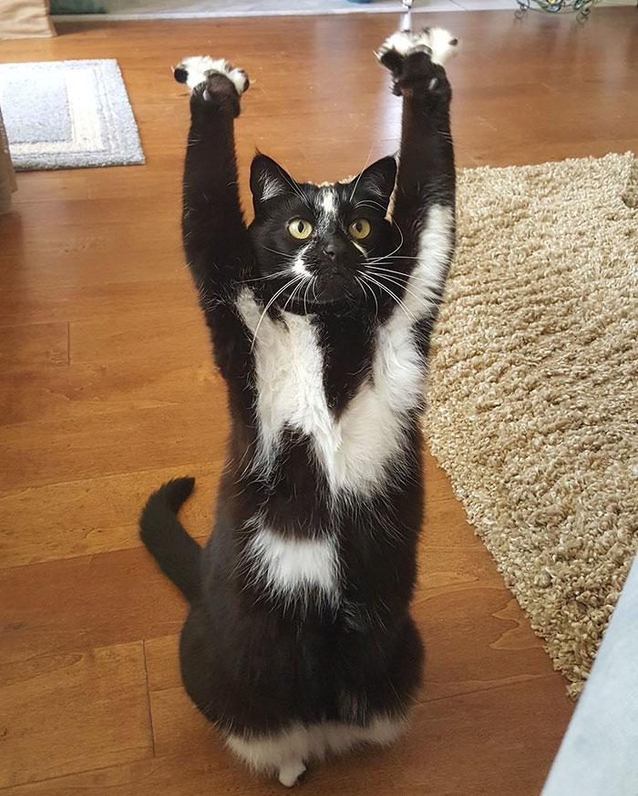 standing-cat-keys-goal-kitty-23