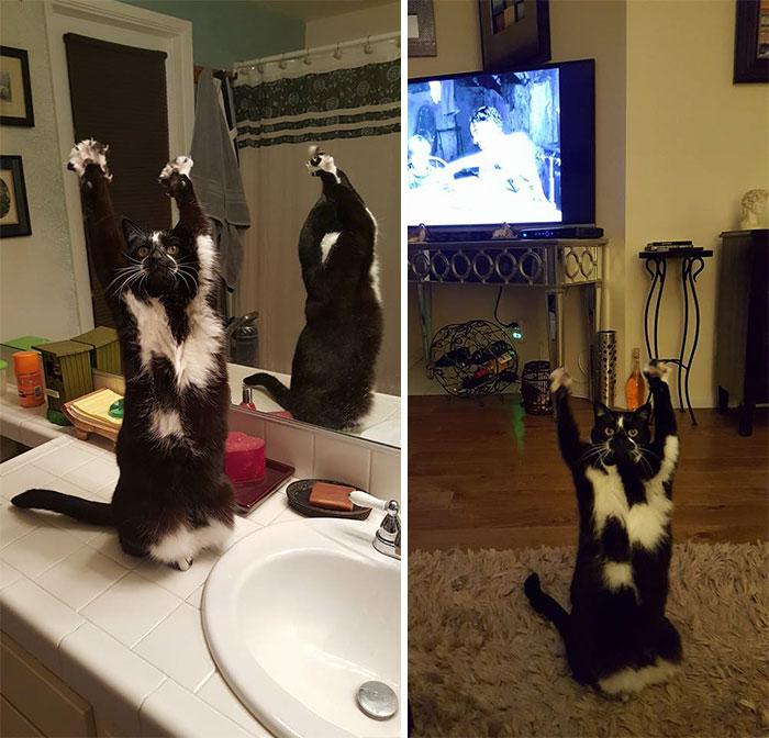 standing-cat-keys-goal-kitty-27
