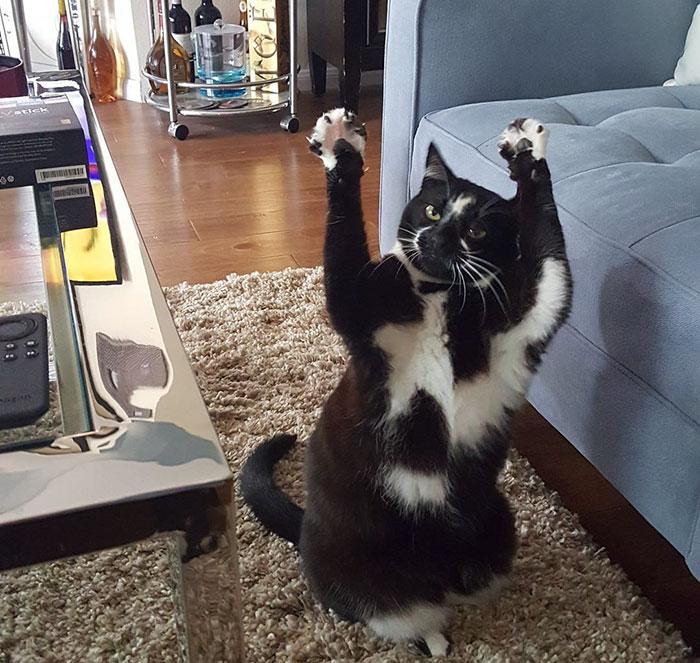 standing-cat-keys-goal-kitty-5