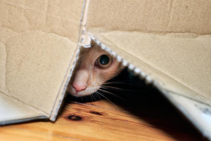 193297-725x483-cat-hiding