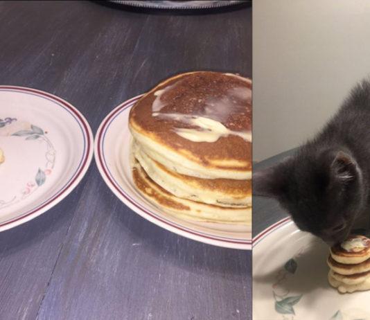 Pancake a colazione per il gattino Mr. Wilson
