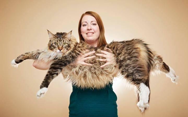Ludo, un gatto da Guinnes dei Primati