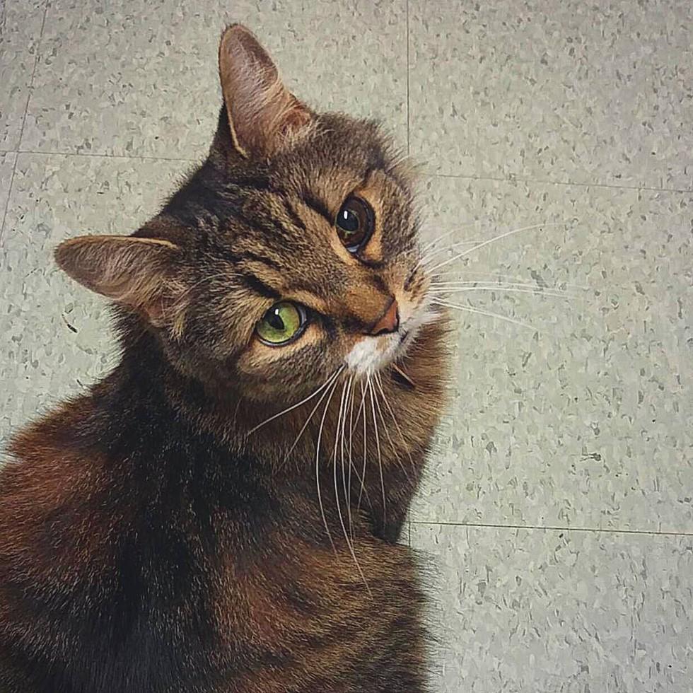 Stella, gatta con gli occhi unici