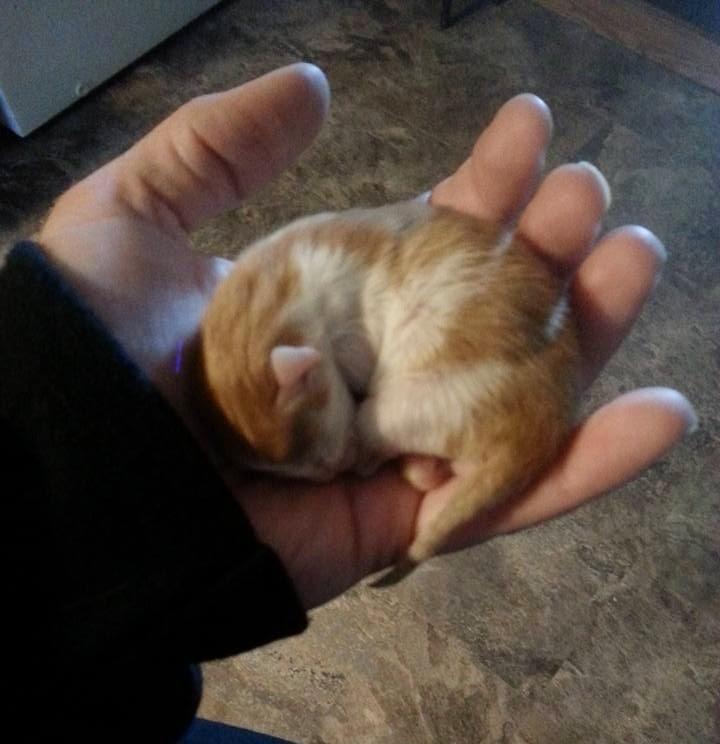 Il piccolo Peanut dopo pochi giorni dal ritrovamentp