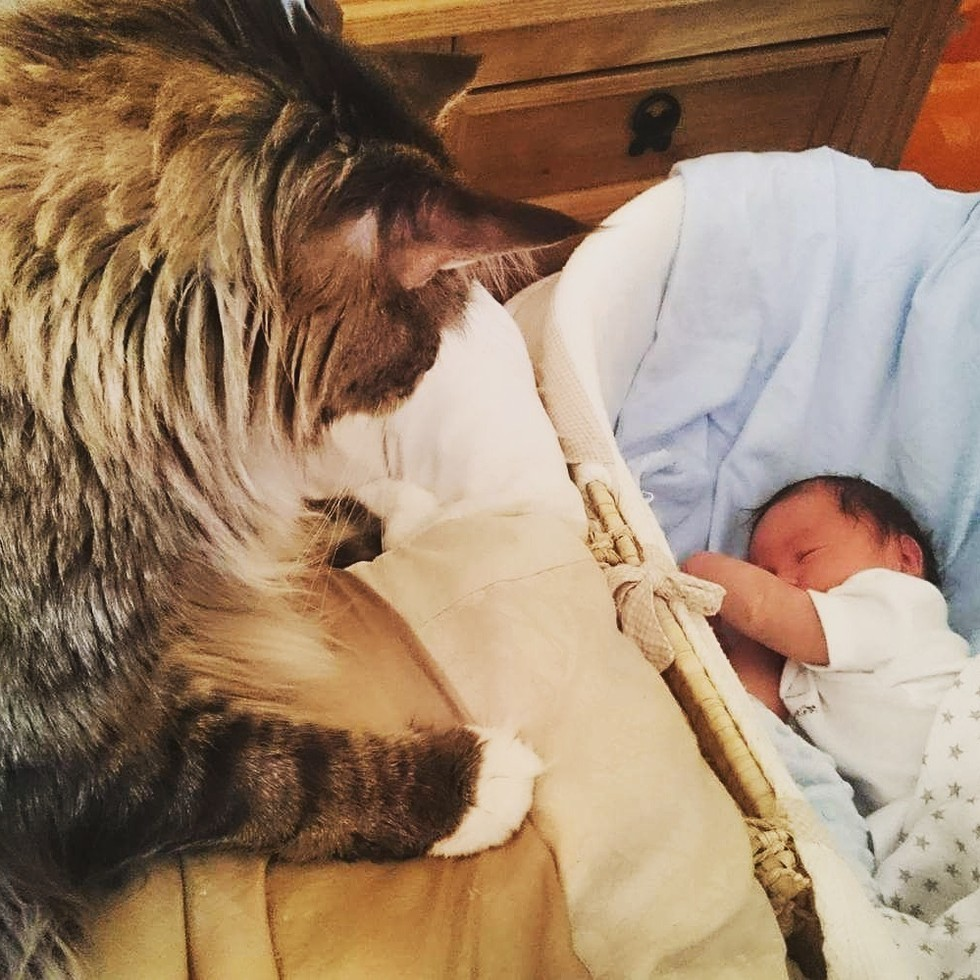 Il gatto Ludo veglia sul fratellino Ryder