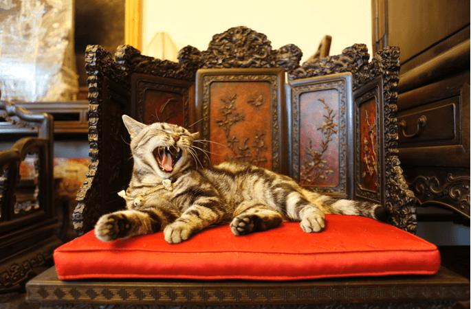 I gatti di Guanfu