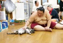 Muur, un gatto tra i giganti del sumo giapponese