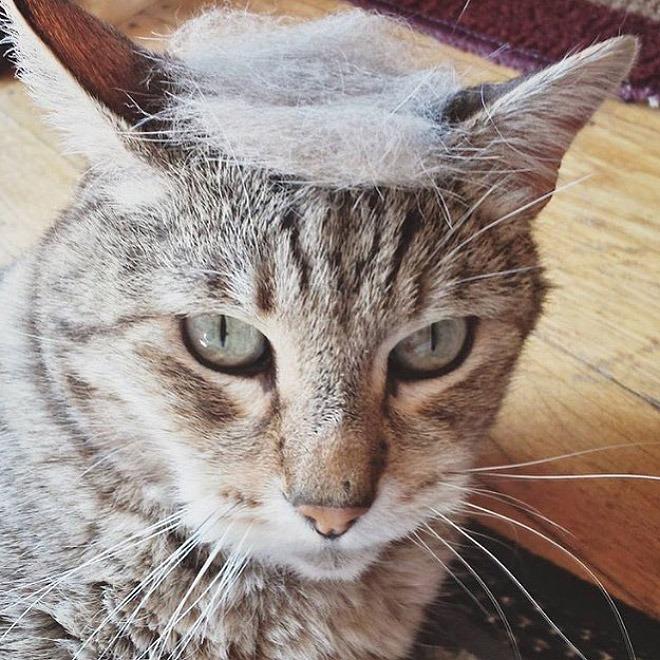 trump-cat11