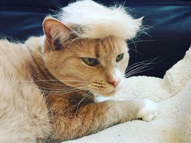 trump-cat15