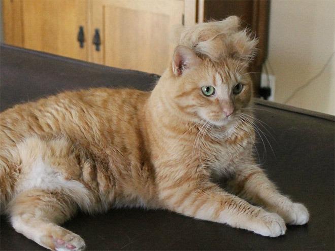 trump-cat17