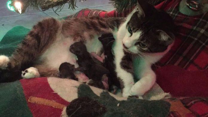 Mamma Tink e i suoi quattro gattini