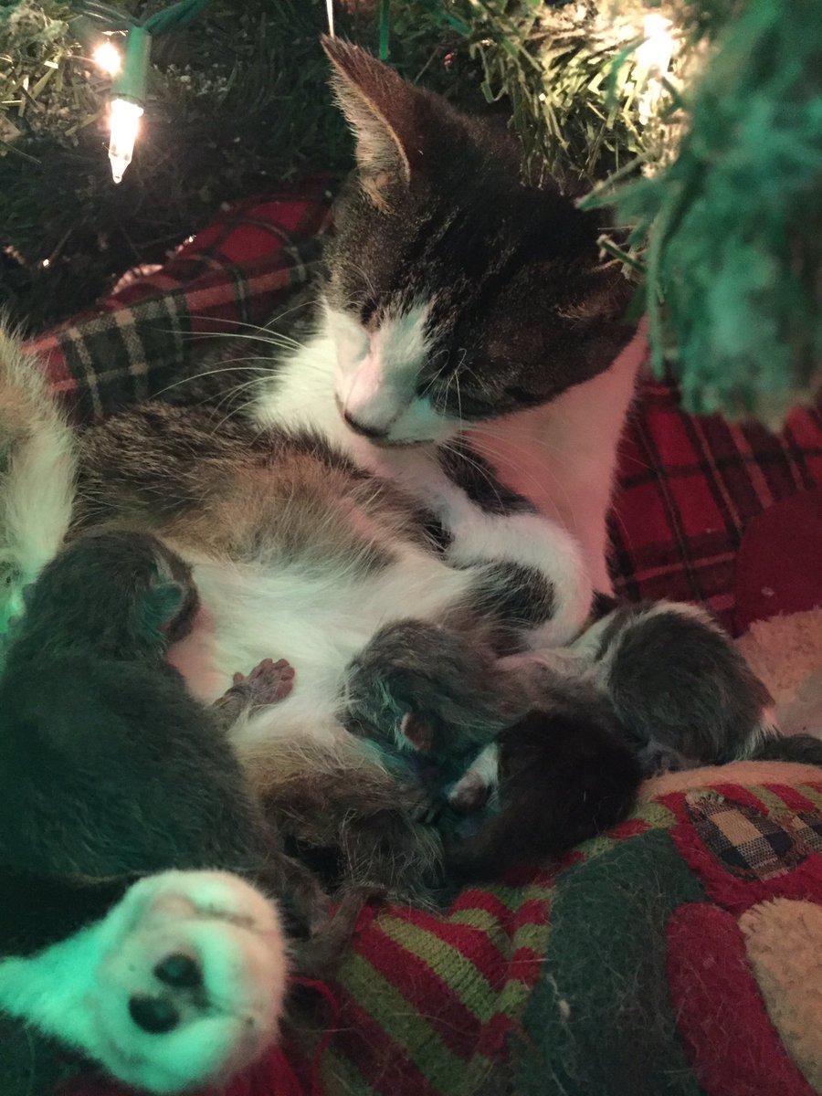 I quattro gattini di Tink