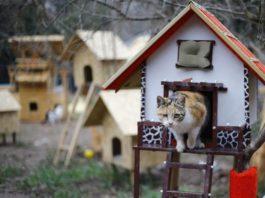 Il villaggio per gatti randagi nato in Turchia