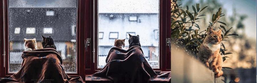 I gatti di Felicity Berkleef