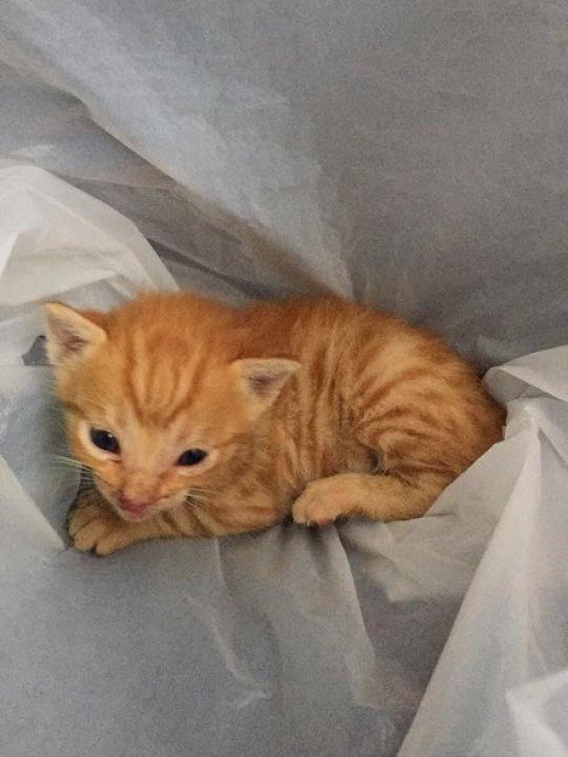 Il gattino rosso salvato dal motociclista di Hong Kong