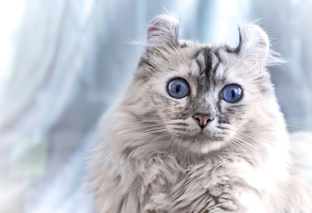 Unik Dan Menggemaskan Apa Kamu Pernah Mendengar 11 Nama Ras Kucing Ini Sebelumnya