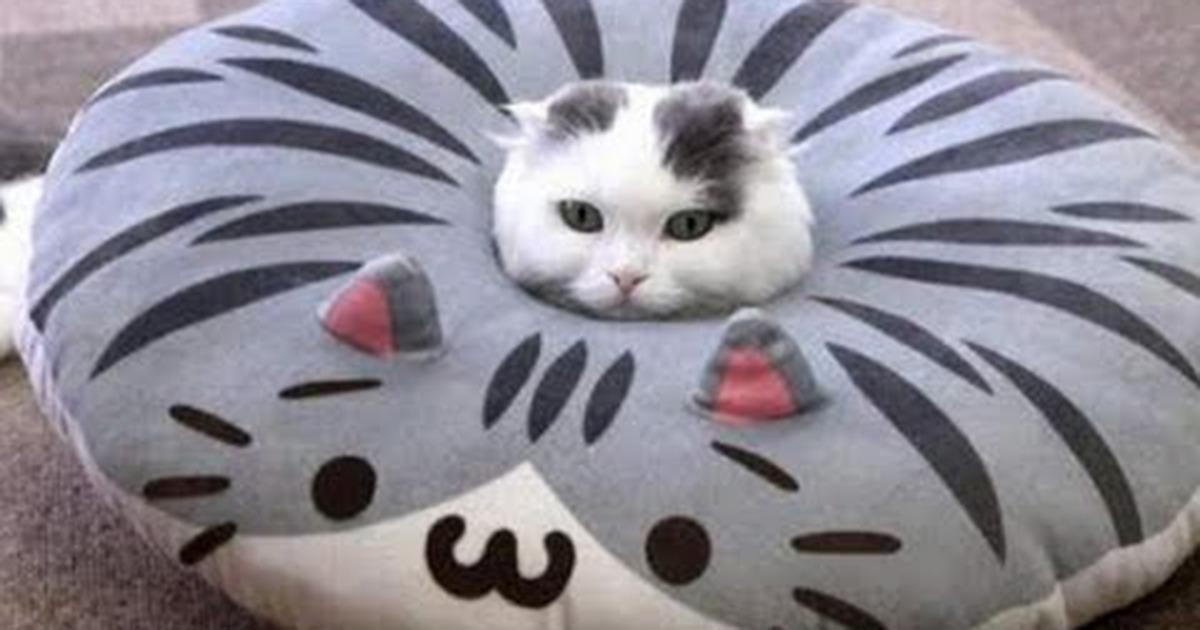 Populaire Gatti divertenti: prova a non ridere, se ci riesci! - Gattissimi RE03
