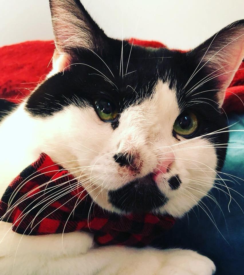 Eutanasia gatto: Memphis, il gatto con due nasi che ha rischiato di essere soppresso