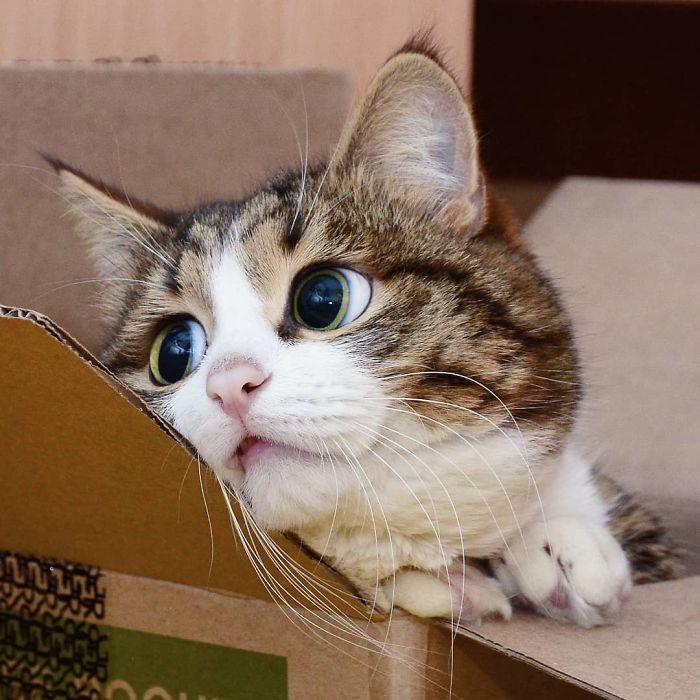 Rexie, il gatto che fa le linguacce