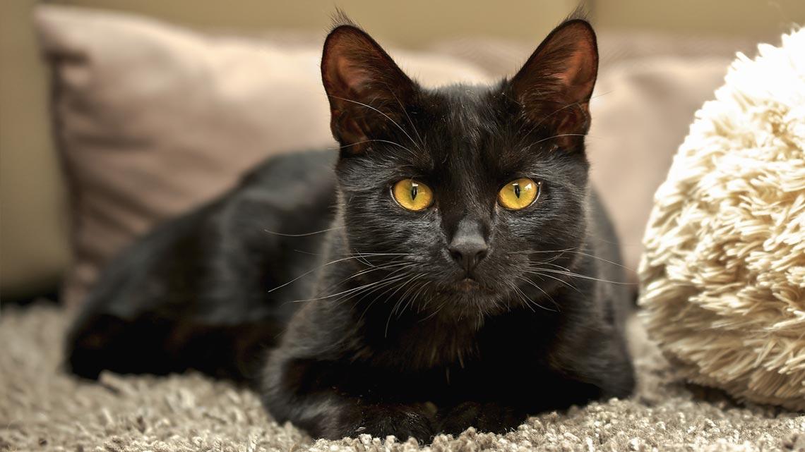 nomi gatti neri