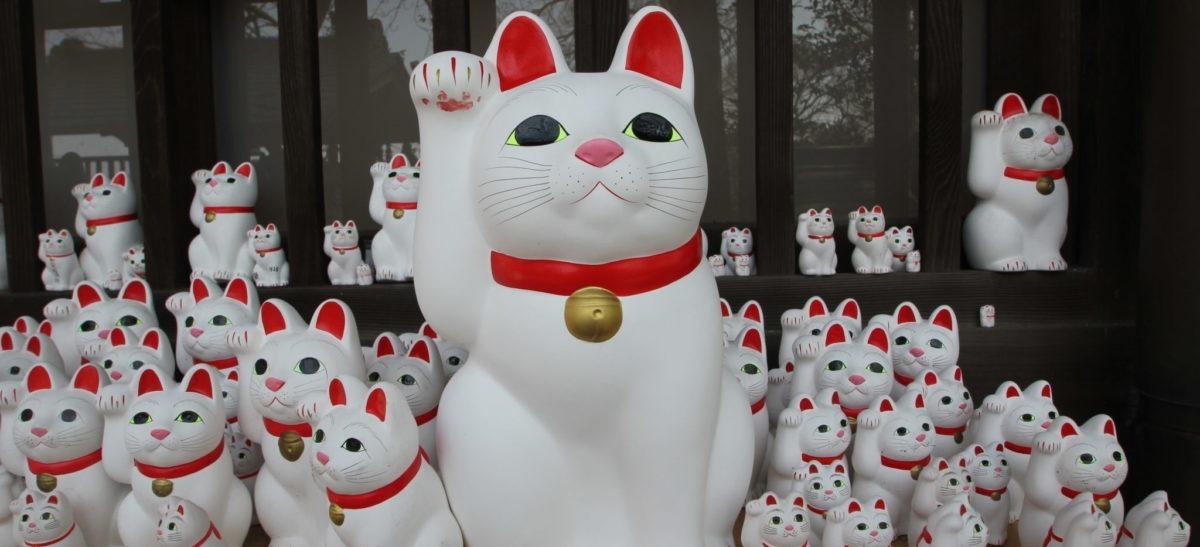 nomi giapponesi per gatti