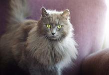 nomi per gatti femmine