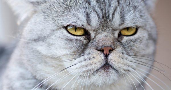 Nomi per gatti maschi gattissimi for Nomi per cani maschi piccoli