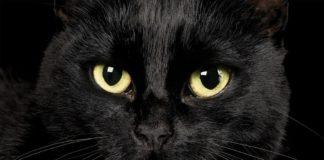 nomi per gatti neri