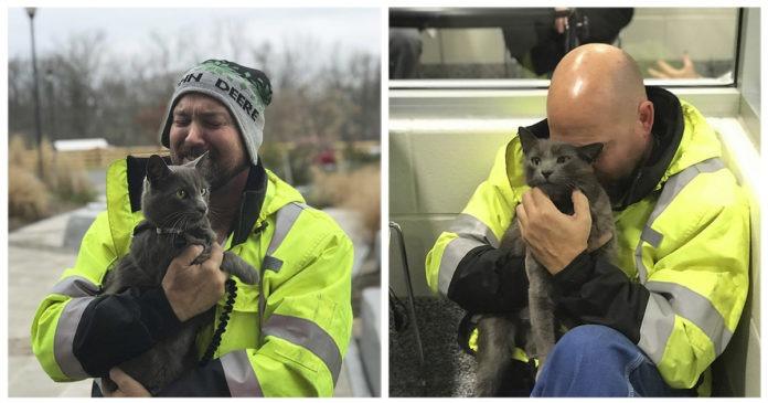 camionista ritrova il suo gatto