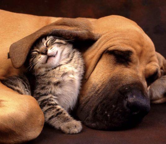 coronavirus cani gatti