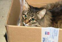 gatto-salva-neonato-abbandonato